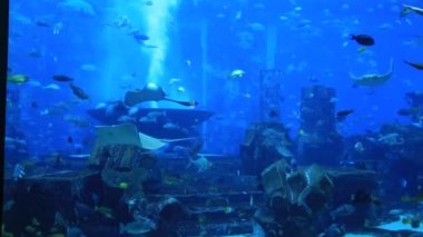 Large aquarium in Hotel Atlantis — Video Stock
