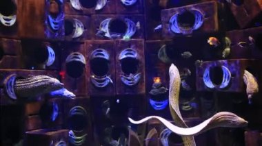Photo of a moray on a coral reef — Stock Video