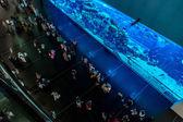 Grootste aquarium van de wereld in dubai mall — Stockfoto