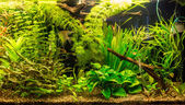 Ttropical freshwater aquarium with fishes — Stock fotografie