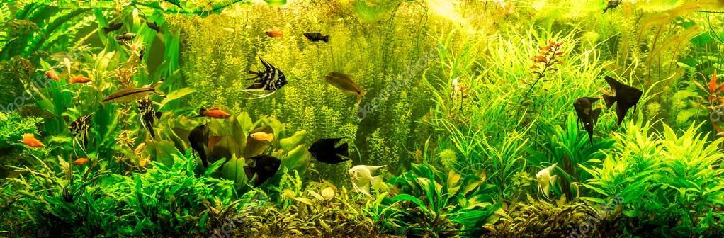 аквариум с пресноводными рыбками фото