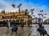Lot of doves in Krakow old city. — Stock Photo