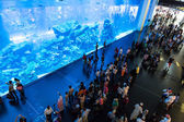 Largest aquarium in Dubai Mall — Stock Photo