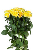 Gele rozen — Stockfoto