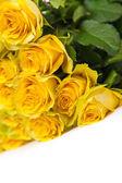 Yellow roses — Stock Photo