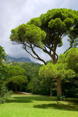 Park s zelenými stromy a horami. — Stock fotografie
