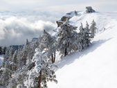 Snow-covered pine trees on the mountain. — Stock Photo