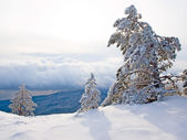 Snow-covered pine trees on the mountain. — 图库照片