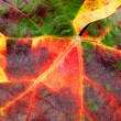 Colorful leaf texture closeup background. — Stock Photo