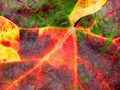 Sfondo di closeup texture foglia colorata. — Foto Stock