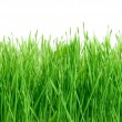 Green grass isolated on white background. — Stock Photo
