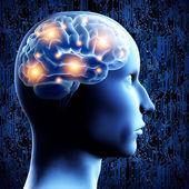 Mózg - 3d ilustracja. — Zdjęcie stockowe
