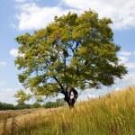 Tree. — Stock Photo