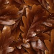 Stock Photo: Seamlessly brown oak leafs background.
