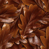 Seamlessly brown oak leafs background. — Stock Photo