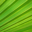 Palm leaf texture — Stock Photo #13637608