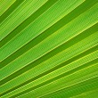 Royalty-Free Stock Photo: Palm leaf texture
