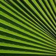 Palm leaf texture — Foto de Stock