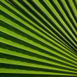 Palm leaf texture — Stock Photo