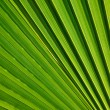 Palm leaf texture — Foto Stock