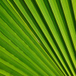 Palm leaf texture — Photo