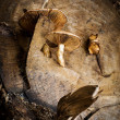 Mushrooms on a wood stump — Stock Photo