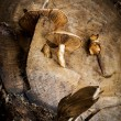 Mushrooms on a wood stump — Foto de Stock