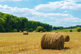 Fresh hay rolls in a field — Stock Photo