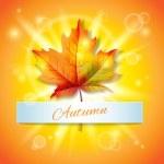 Sonbaharda akçaağaç yaprağı — Stok Vektör