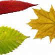 Stock Photo: Leafs autumn set