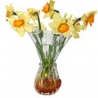 Flowers narcissus in vase — Stock Photo