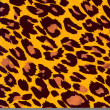 Stock Photo: Leopard animal image as background