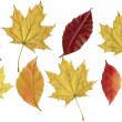 Set leafs autumn — Stock Photo