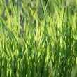 Grass — Stock Photo #18474817