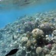 Royalty-Free Stock Vektorfiler: Coral reef in the red sea