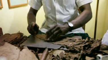 Manufacturing of cigars. Cuba. — Stock Video