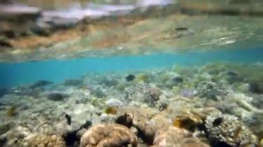 Coral reef in the red sea — Stock Video