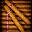 Stock Photo: Background cigars in humidor