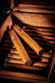 Charutos no humidor — Foto Stock
