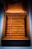 ヒュミドールの葉巻 — ストック写真