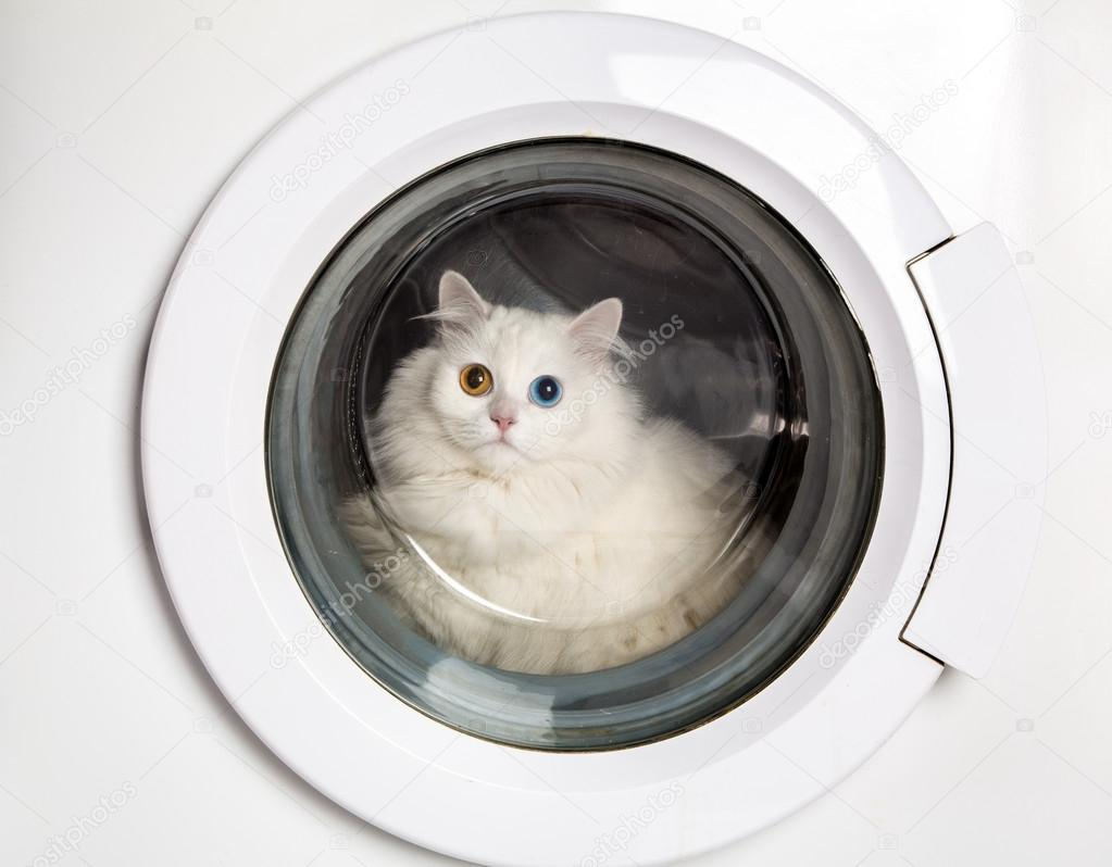 Washer machine and closed white cat — Stock Photo #13373180