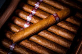 Cigars in humidor — Stock Photo