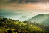 Tea plantations in India (tilt shift lens) — Stock Photo