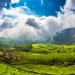 Tea plantations in India — Stock Photo