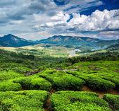 Tea plantations in India — Stock Photo