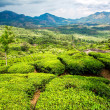 Stock Photo: Teplantations in India