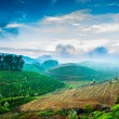 Tea plantations in India — Stock Photo #24731309