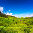 Tea plantations in India — Stock Photo #24731313