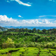 Tea plantations in India — Stock Photo #24731405