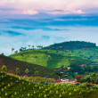 Tea plantations in India — Stock Photo #24731445